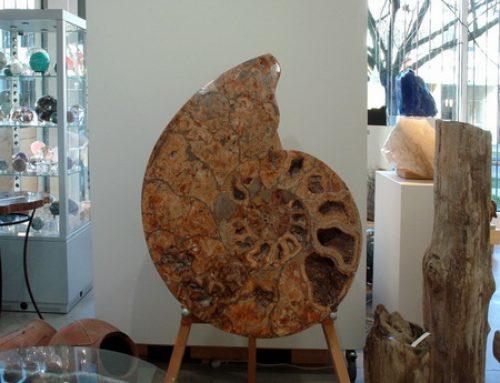 Giant Ammonite